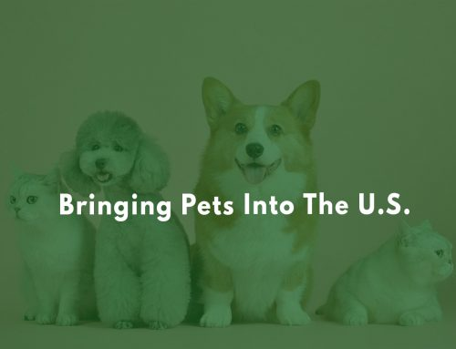 Bringing Pets into the U.S.