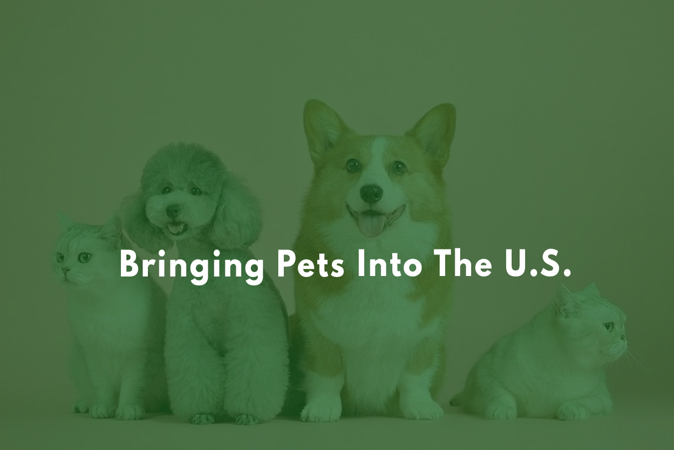 What are the requirements to bring a dog into the U.S.?
